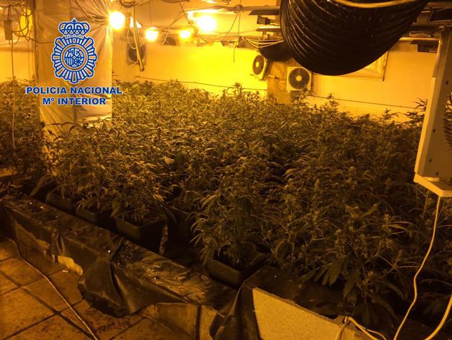 plantacion-marihuana-denia